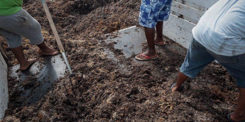 La amenaza de los tiraderos clandestinos de sargazo (Quintana Roo)