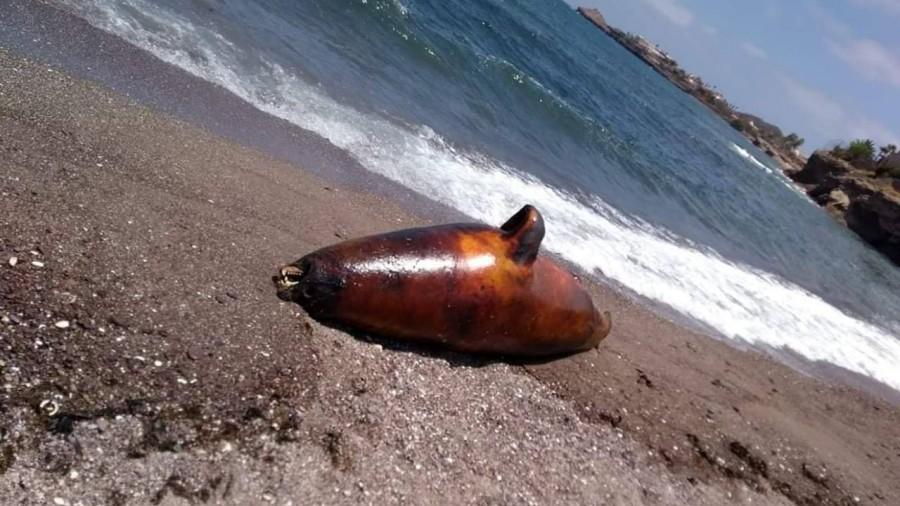 Aparecen muertos lobo marino, tortuga y peces en playas de Guaymas; usuarios de redes lo relacionan con derrame de ácido sulfúrico de Grupo México (Sonora)