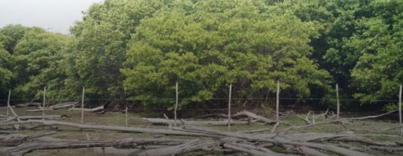 Empresa saquea arena y destruye zona de mangle (Campeche)