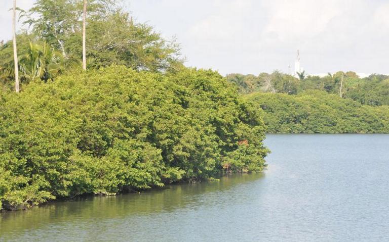 A la defensa de los manglares (Tamaulipas)
