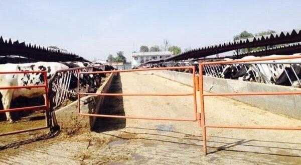 Señalan que las heces de vacas contaminan la región Tizayuca (Hidalgo)