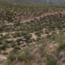 Los LeBarón emprenden la vuelta a Chihuahua con sus muertos