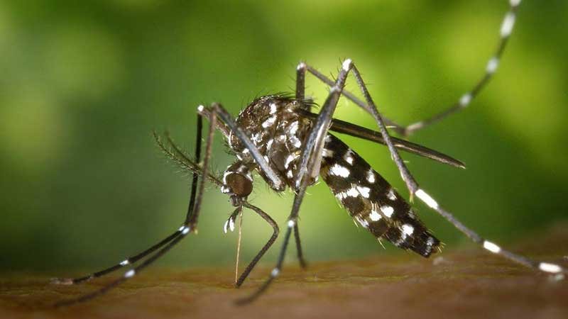 Dengue Epidemia Estatal (Nayarit)