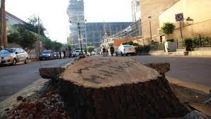 Plan de Mítikah requiere talar 60 árboles más, denuncian (Ciudad de México)