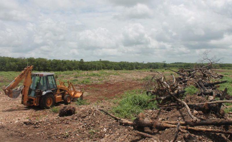 Quintana Roo: Sembrando Vida destruye 10 mil hectáreas de selva