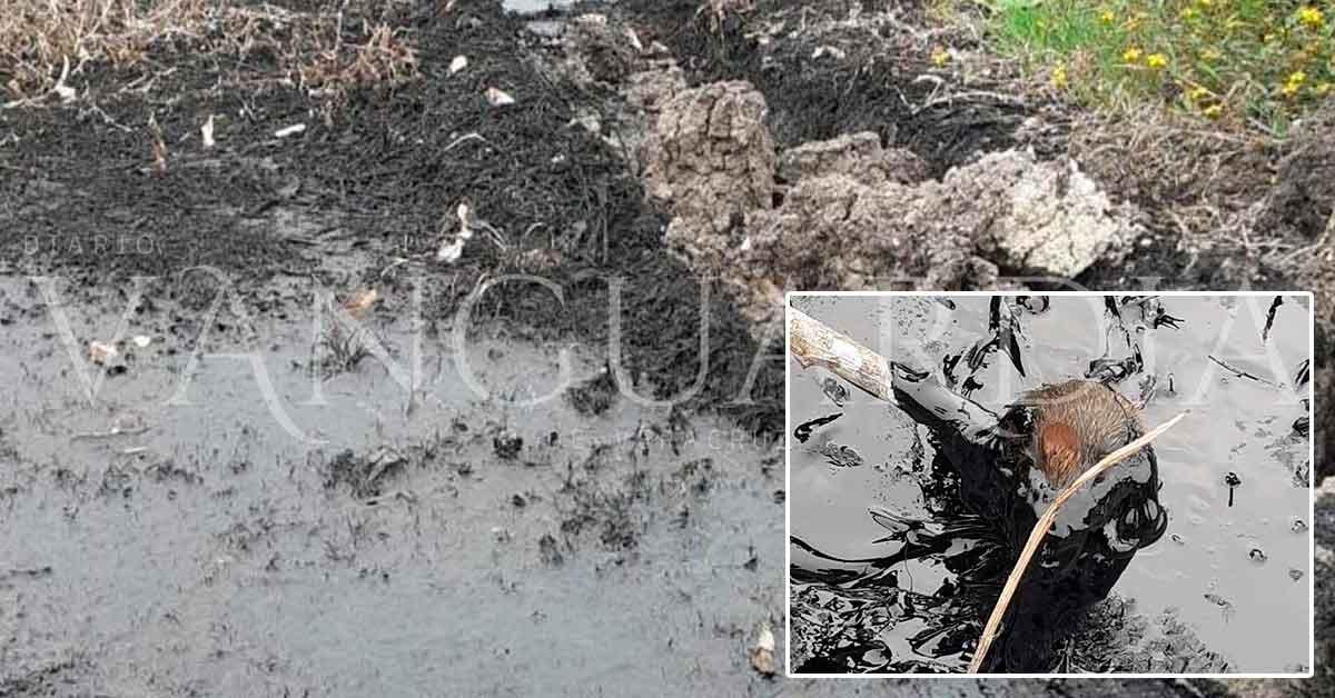 Mortandad de especies acuáticas por fugas de hidrocarburos en Papantla (Veracruz)