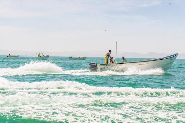 Contaminación ha afectado pesca en Veracruz Puerto