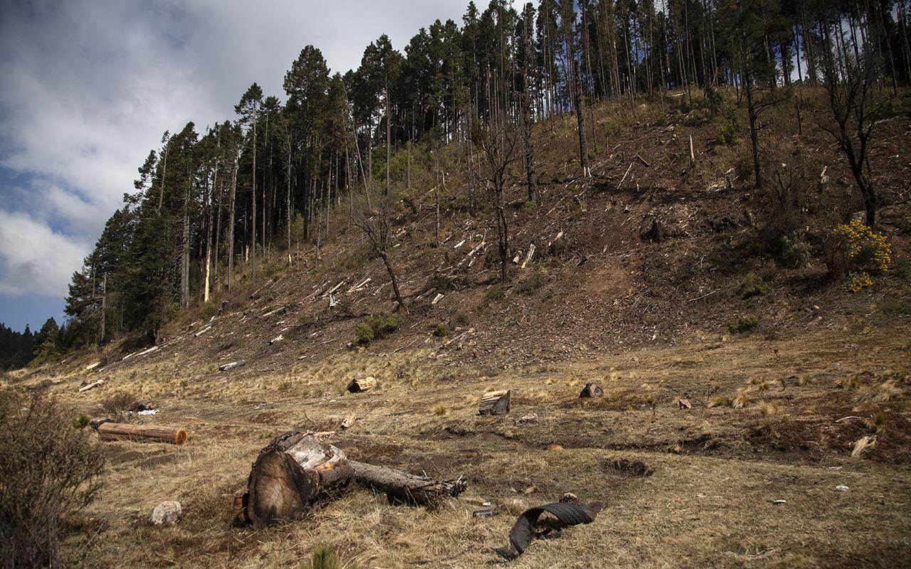 Tala en los bosques de Ocuilan: a punta de armas largas y con toda impunidad