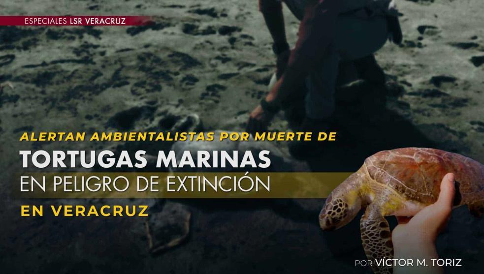 Alerta por muerte de tortugas marinas: entre malas prácticas pesqueras y contaminación (Veracruz)