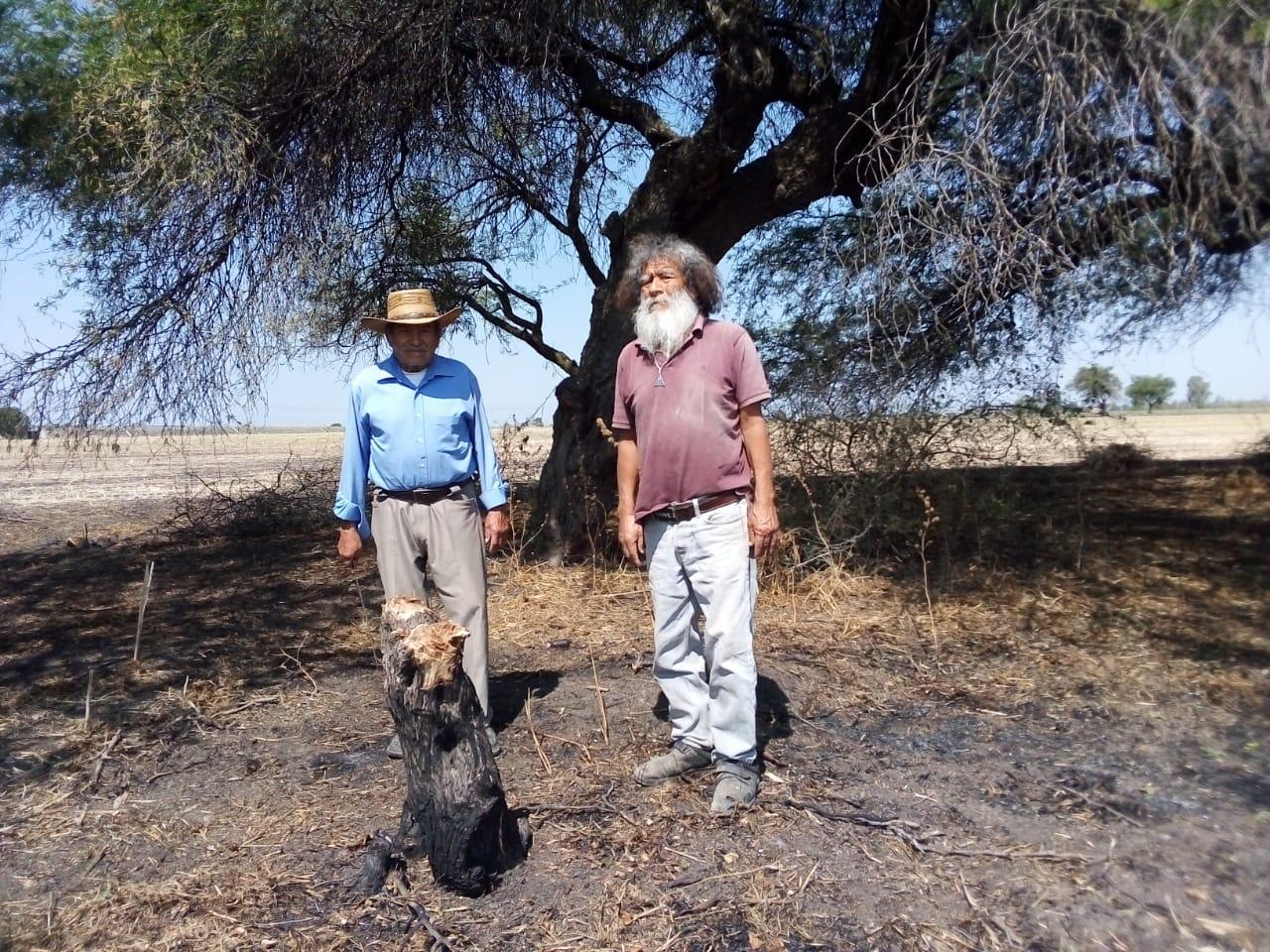 Irapuato: Ecologistas denuncian tala y quema de mezquites en reserva de San Agustín de Tordos
