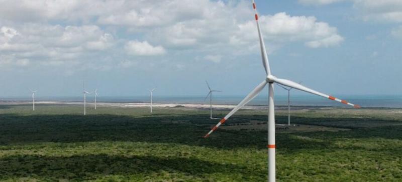 Yucatán pierde manglar a causa de parques eólicos y fotovoltaicos, denuncian