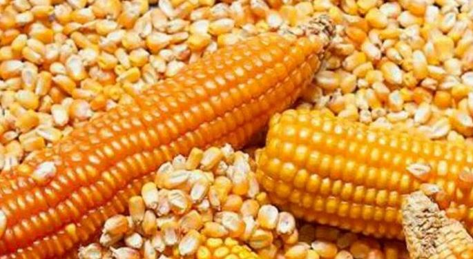 Cierre de carreteras por COVID-19 impide comercialización de maíz en la Zona Maya