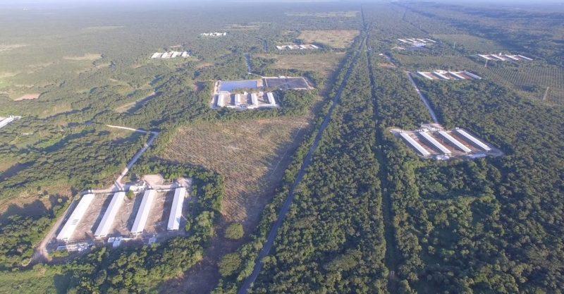 Espacios naturales ocupados y agua contaminada: las irregularidades de las granjas porcícolas en Yucatán