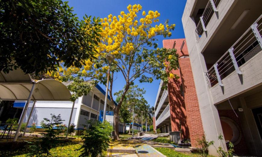 Universitarias de Nayarit piden medidas urgentes ante riesgos por el confinamiento