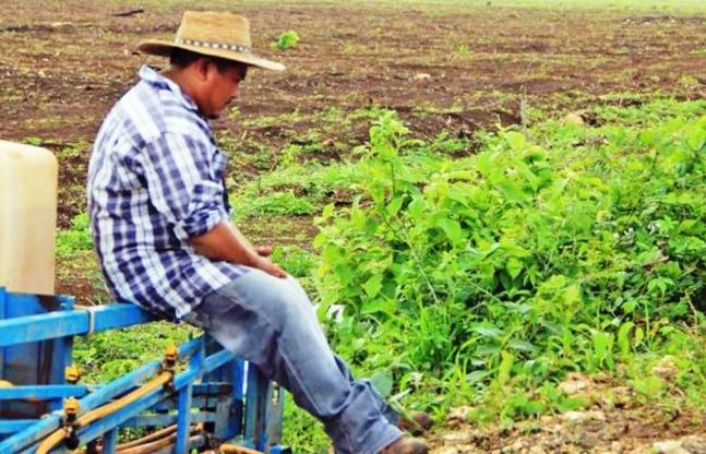 Más de 22 mil parcelas en ejidos de Yucatán se han privatizado ilegalmente