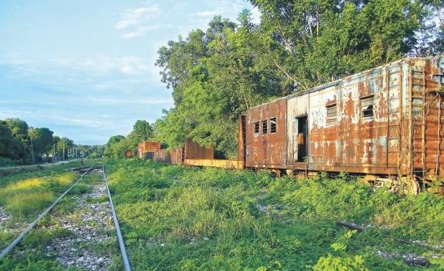Conacyt ocultó informe crítico con el Tren Maya; ven riesgo