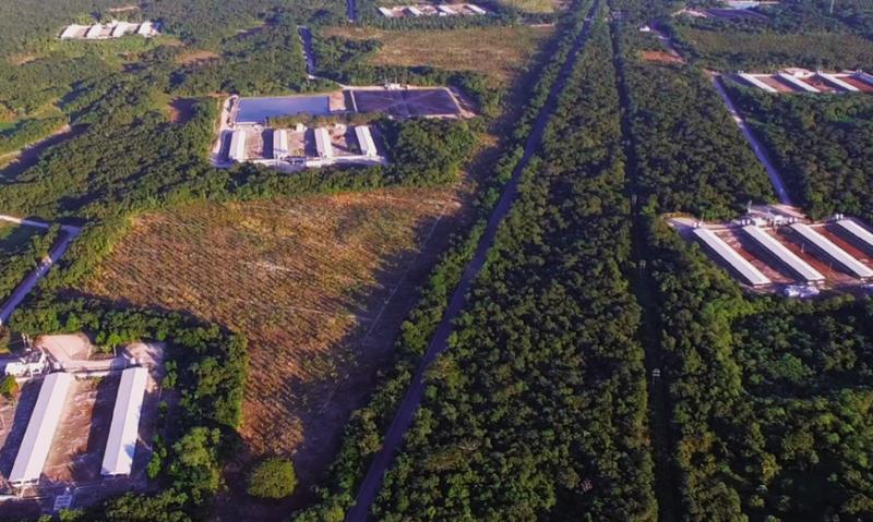 La SCJN atrae juicio promovido por niños de Homún contra empresa porcícola (Yucatán)