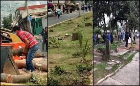 VECINOS SE ENFRENTAN A POLICÍAS PARA DETENER TALA DE ÁRBOLES EN ATIZAPÁN (Estado de México)