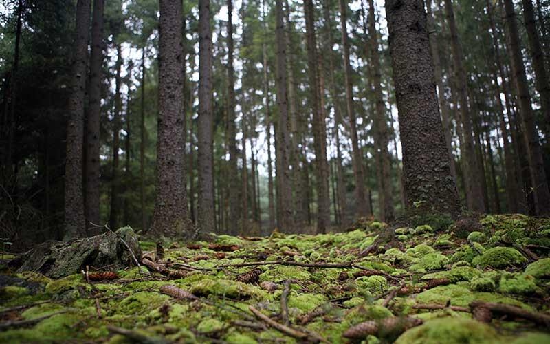 Reforma ambiental de Silvano Aureoles «privatiza» áreas naturales protegidas (Michoacán)