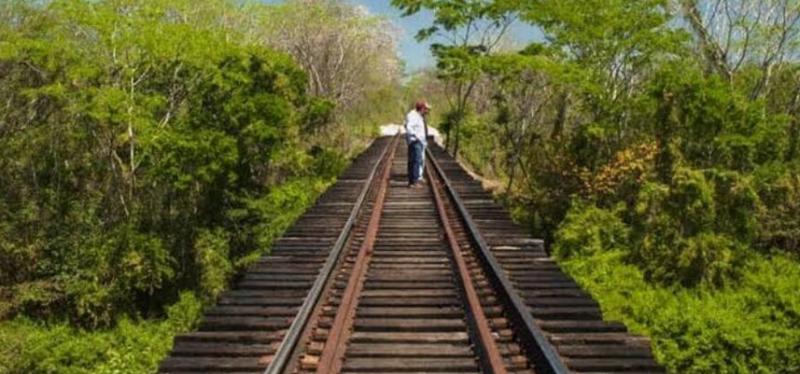Pasos de fauna del Tren Maya serían construidos después de atropellamientos de animales, denuncian