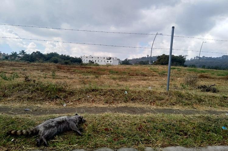 Denuncian muerte de fauna silvestre a causa de fraccionamientos (Jalisco)