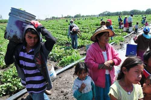 Protesta FIOB por cierre de comedores para hijos de jornaleros en Sinaloa