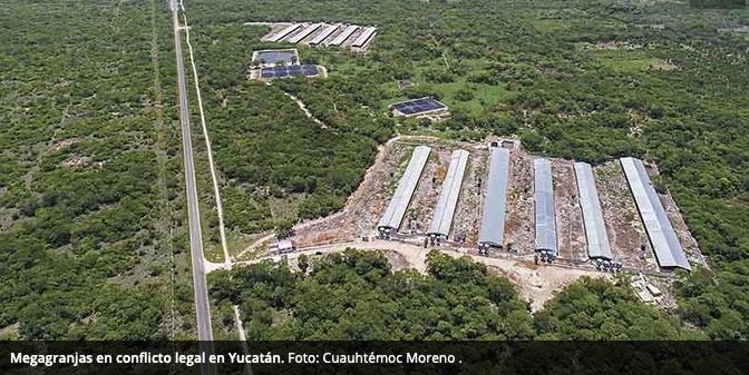 Megagranjas en conflicto legal en Yucatán