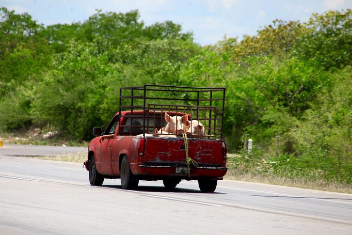 Población maya paraliza granja de cerdos que contamina Chapab (Yucatán)
