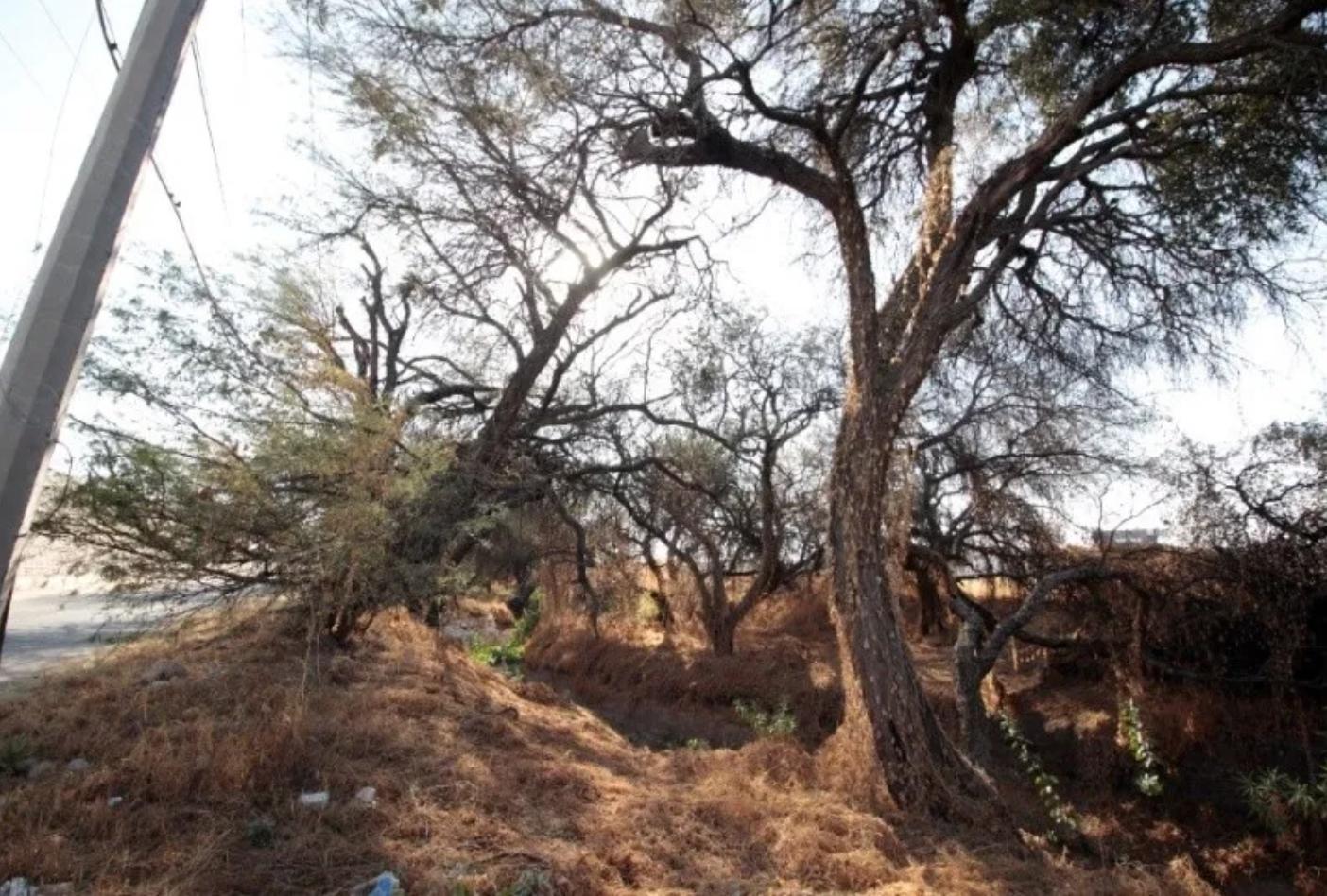 Denuncian a constructora Aldaba por daño ambiental en el arroyo Las Liebres (Guanajuato)