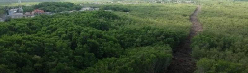 Detectan privatización de más de 500 mil hectáreas de tierras ejidales en la Península de Yucatán