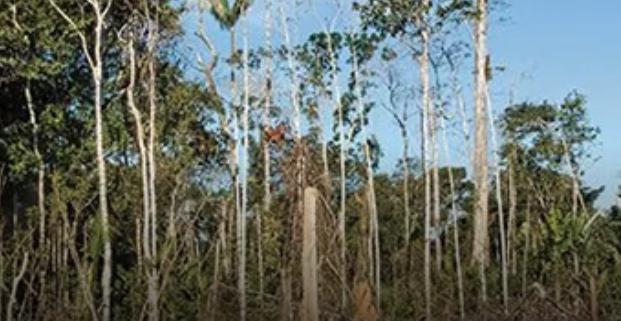 Deforestación y corrupción, resultados de Sembrando Vida en el sur de México