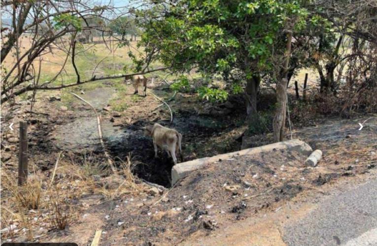 Mineras de Canadá podrían estar tras devastación de El Farallón (Veracruz)
