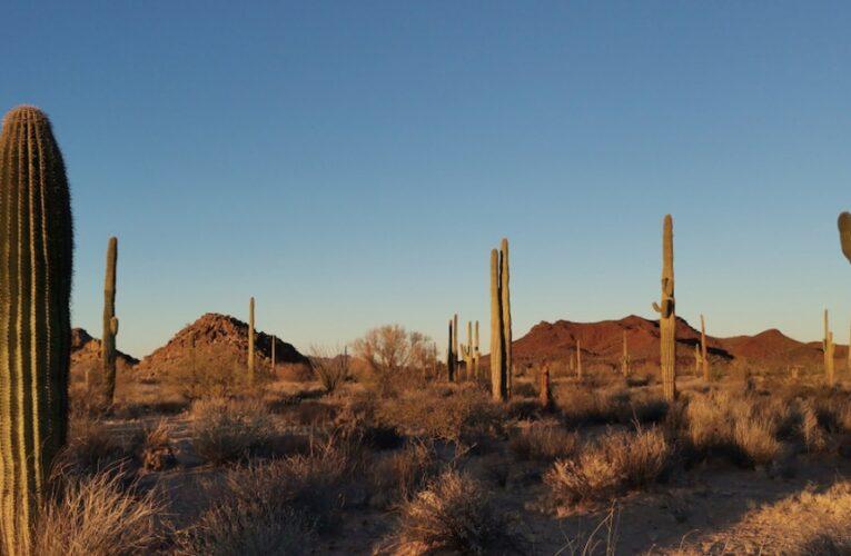 Se oponían a mina de Baillères en Sonora. Los asesinaron. El ejido se levanta y demanda justicia