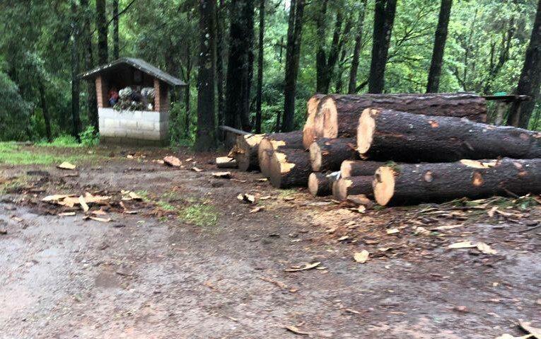 Denuncian tala inmoderada de bosque en Valle de Bravo (EdoMex)